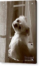 Puppy Pose Acrylic Print by Lynn Reid