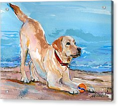 Puppy Pose Acrylic Print by Molly Poole