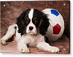 Puppy With Ball Acrylic Print