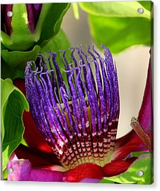 Puprle Passion Acrylic Print