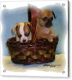 Pups In A Basket Acrylic Print by Beverly Johnson