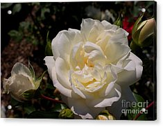 Acrylic Print featuring the photograph Pure Beauty by David Bishop