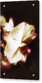 Acrylic Print featuring the photograph Pure by Isabella F Abbie Shores FRSA