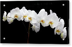 Pure Orchid Acrylic Print by Jeanette Oberholtzer