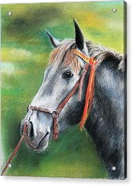 Acrylic Print featuring the painting Pure Spanish  by Ceci Watson