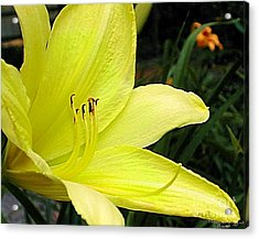 Acrylic Print featuring the photograph Pure Sunshine by Patricia Griffin Brett