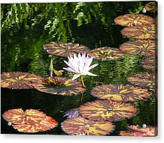 Acrylic Print featuring the photograph Pure Water Lily by Jeanette Oberholtzer