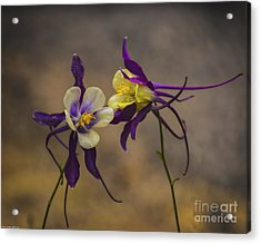 Purple And Gold Acrylic Print
