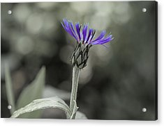 Purple And Grey Acrylic Print by David Stasiak