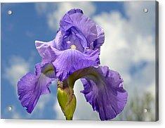 Purple And Sky Acrylic Print by Susan Leggett