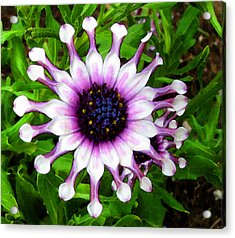 Purple And White Flowers 4  Wc  Acrylic Print