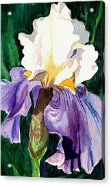 Purple And White Iris Acrylic Print by Janis Grau