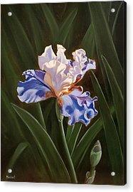 Purple And White Iris Acrylic Print