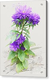 Acrylic Print featuring the painting Purple Aster by Ivana