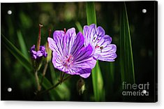 Purple Attraction Acrylic Print