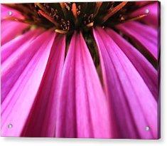 Acrylic Print featuring the photograph Purple Beauty by Eduard Moldoveanu