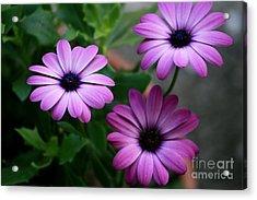 Purple Beauty Acrylic Print by Valia Bradshaw