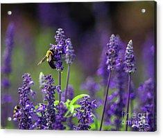 Purple Bee Acrylic Print by Photo Captures by Jeffery