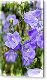 Purple Bell Flowers Acrylic Print by Joann Copeland-Paul