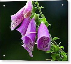 Purple Bells Horizontal Acrylic Print by Marty Koch
