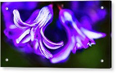 Purple Bells Acrylic Print