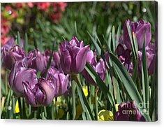 Purple Bliss Acrylic Print