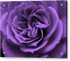 Purple Bliss Acrylic Print