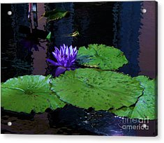 Purple Blue  Lily Acrylic Print by Eric  Schiabor