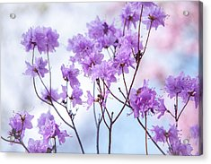 Acrylic Print featuring the photograph Purple Blue Romance by Jenny Rainbow