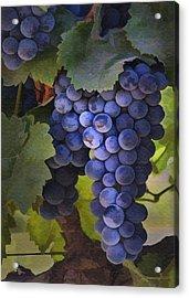 Purple Blush Acrylic Print