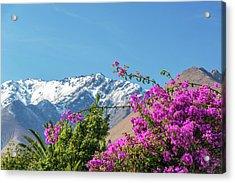 Purple Bougainvillea And Mountains Acrylic Print by Jess Kraft