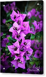Acrylic Print featuring the photograph Purple Bougainvillea by Robert Bales