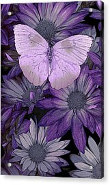 Purple Butterfly Acrylic Print