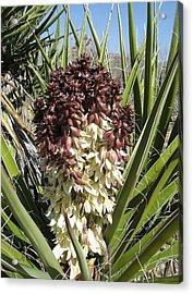 Purple Cactus In Bloom Acrylic Print by Joan Taylor-Sullivant