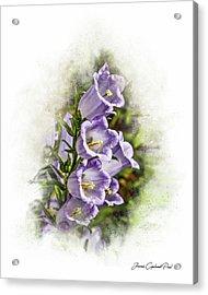 Purple Canterbury Bells Acrylic Print by Joann Copeland-Paul