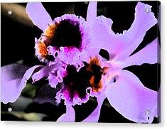 Purple Cattleya Orchid Acrylic Print by Nanette Hert