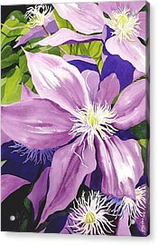 Purple Clematis In Sunlight Acrylic Print by Janis Grau