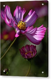 Acrylic Print featuring the photograph Purple Coleus by Michael Flood