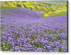 Acrylic Print featuring the photograph Purple  Covered Hillside by Marc Crumpler