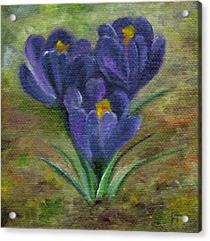 Purple Crocus Acrylic Print
