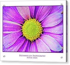 Purple Daisy Acrylic Print
