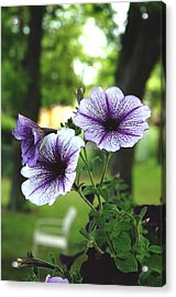 Acrylic Print featuring the photograph Purple Delights by Kicking Bear  Productions