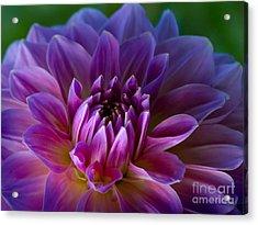 Purple Dream Acrylic Print by Lutz Baar