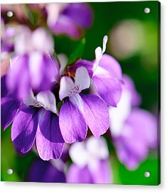 Purple Dream Acrylic Print