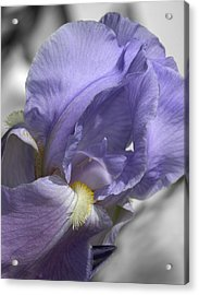 Purple Acrylic Print by Elizabeth Reynders