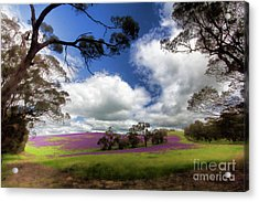 Purple Fields Acrylic Print by Douglas Barnard