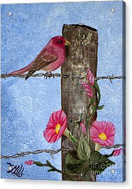 Purple Finch And Morning Glories Acrylic Print by Terri Mills