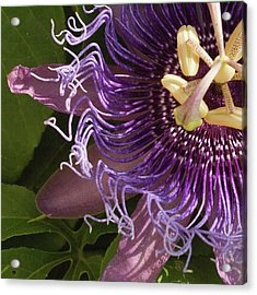 Acrylic Print featuring the photograph Purple Fine View Passion Flower by Michael Flood