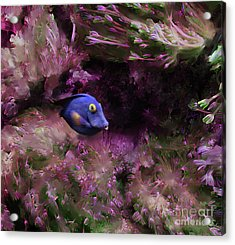 Purple Fish In Pink Grass Acrylic Print