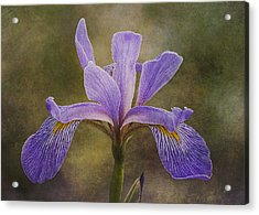 Acrylic Print featuring the photograph Purple Flag Iris by Patti Deters